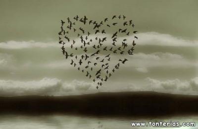 20080829163213-pajaritos-romanticos..jpg