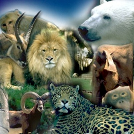20120522235030-zoo.jpg