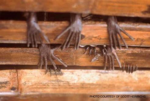 20120704192300-murcielagos.jpg
