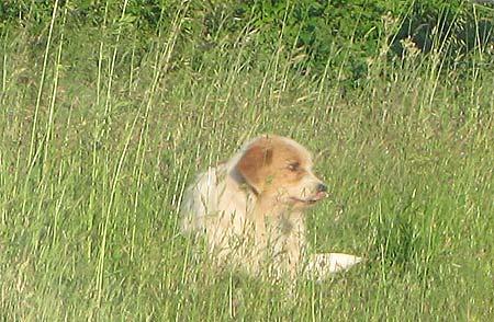 20120723101402-el-perro-fiel-de-santiago-de-compostela.jpg