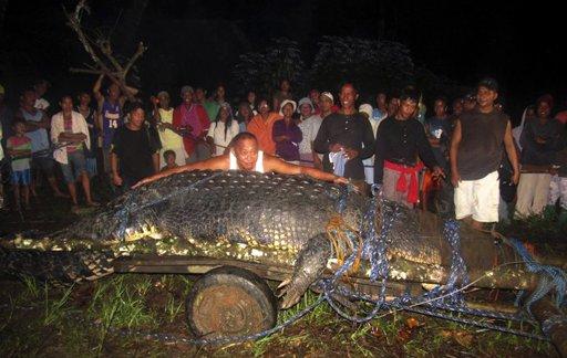 El alcalde Cox Elorde intenta medir un gigantesco cocodrilo que fue capturado el sábado 3 de septiembre de 2011 en un arroyo del poblado de Bunawan, provincia de Agusán del Sur, en el sur de Filipinas. La imagen corresponde al domingo. El cocodrilo macho mide 6,4 metros (21 pies) y pesa poco más de una tonelada. (AP foto)